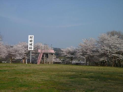村田城桜.jpg