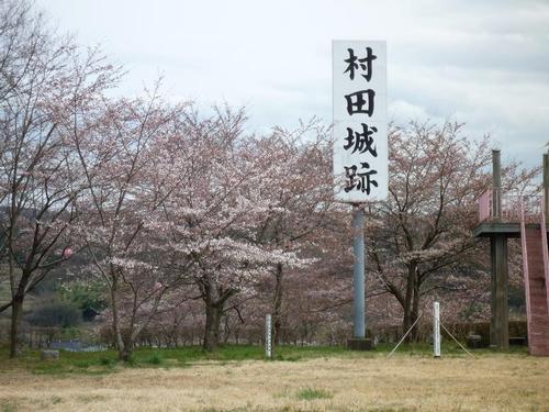 ソメイヨシノ.JPG